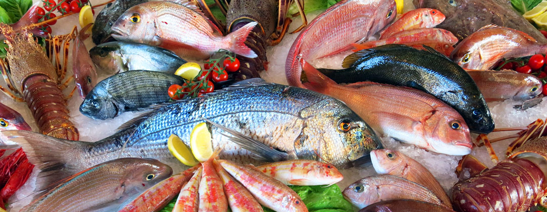 coastal catch seafood exporter