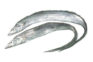 ribbon fish coastal catch