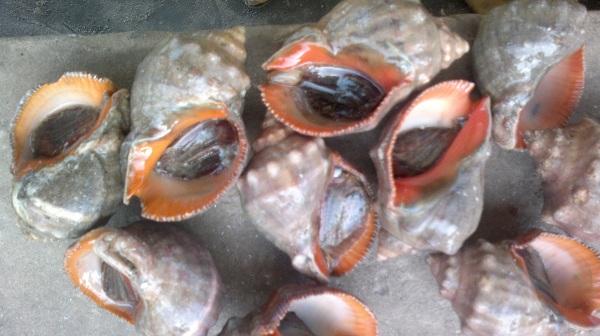 shell fish meat coastal catch