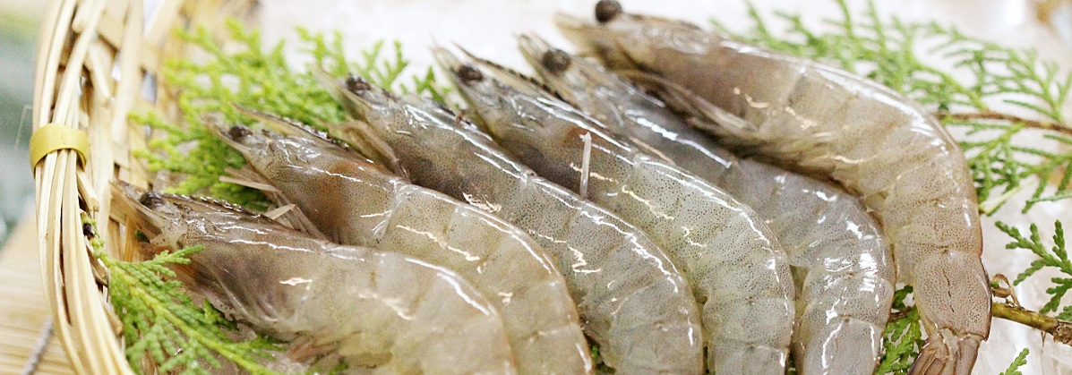 coastal catch vanamei prawns